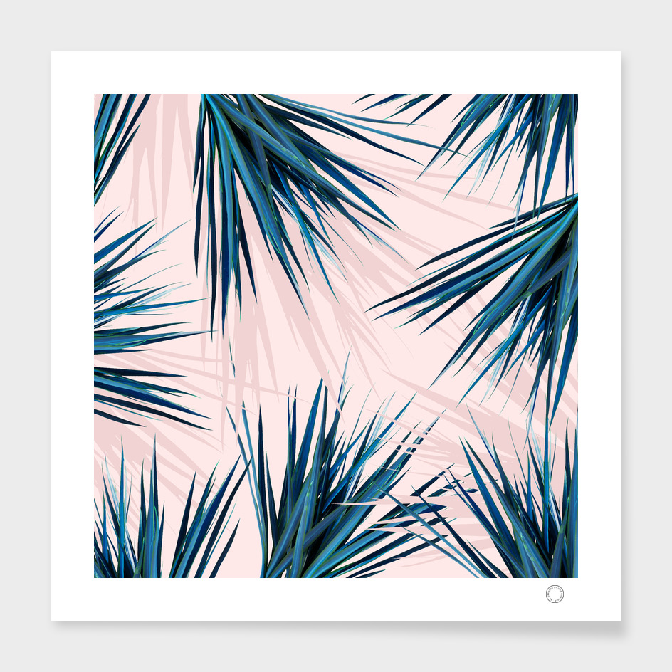 Pointy Palm main illustration