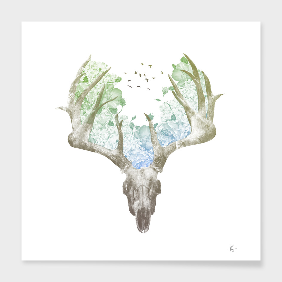Deer Skull main illustration