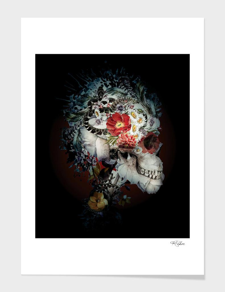 Skull I Black Series main illustration