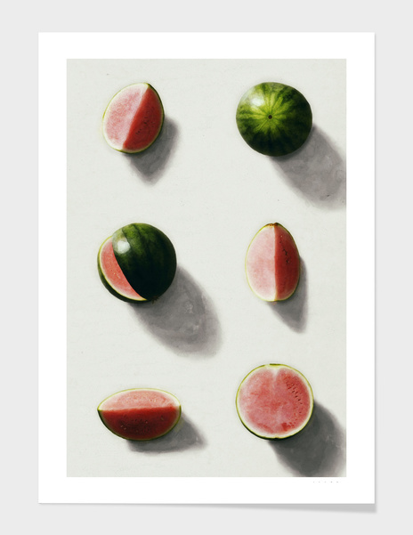 fruit 14 main illustration