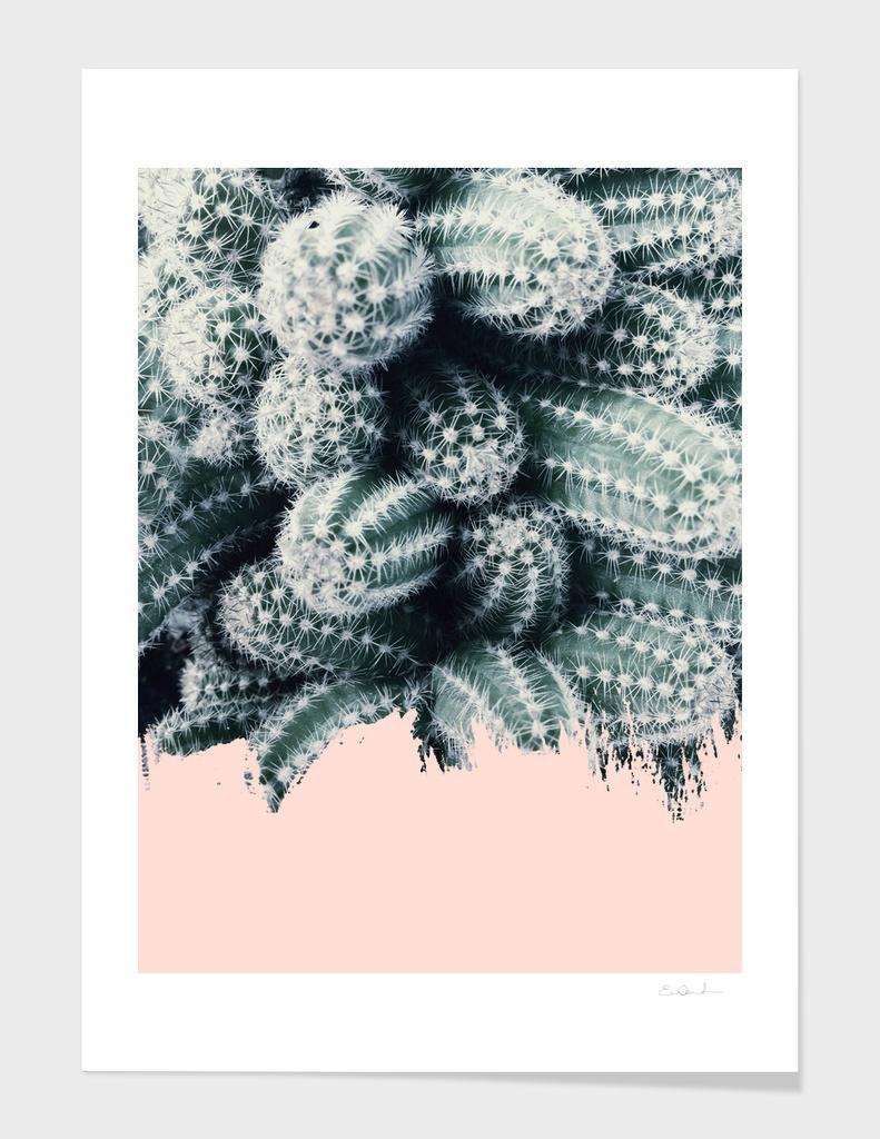 Cactus Love main illustration