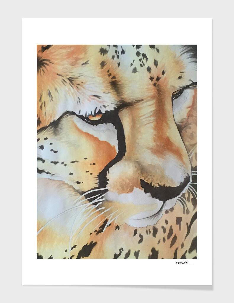 Cheetah main illustration