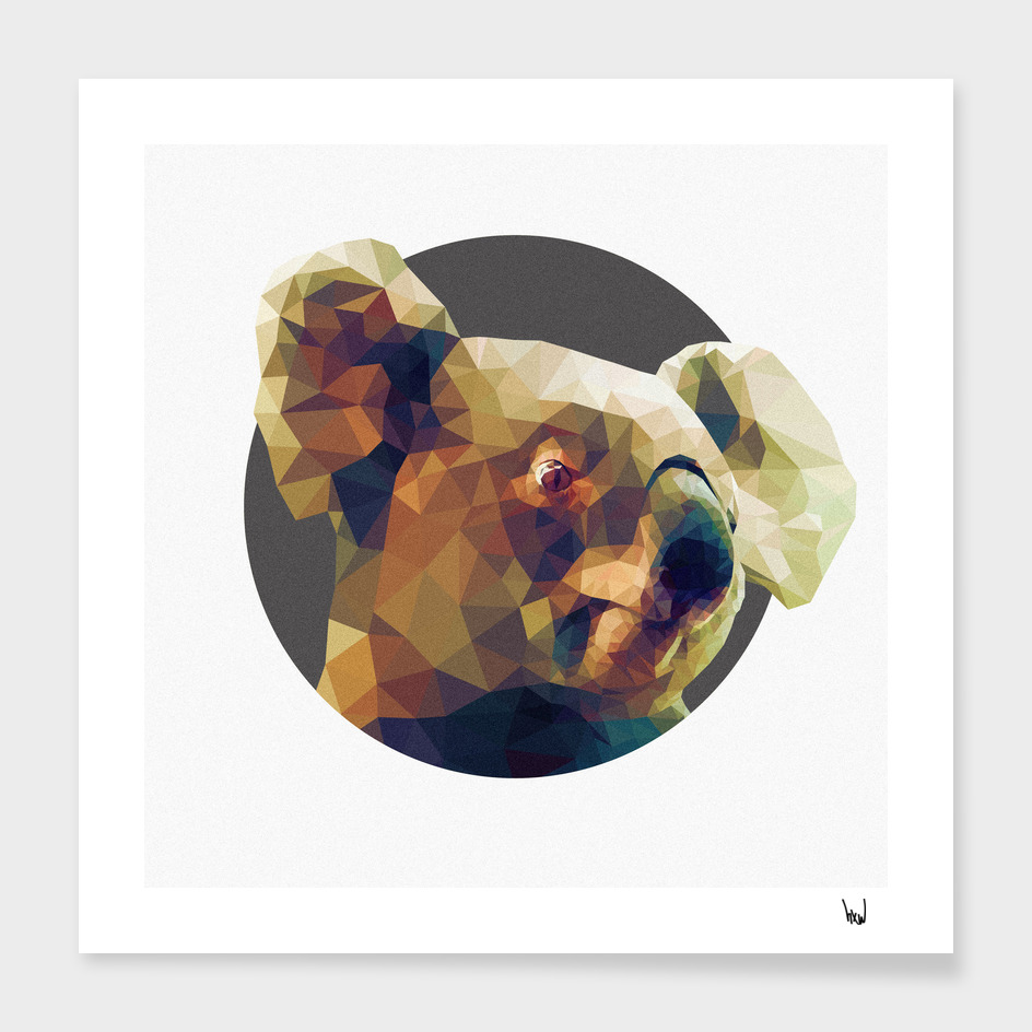 Koala-la-la-laa main illustration