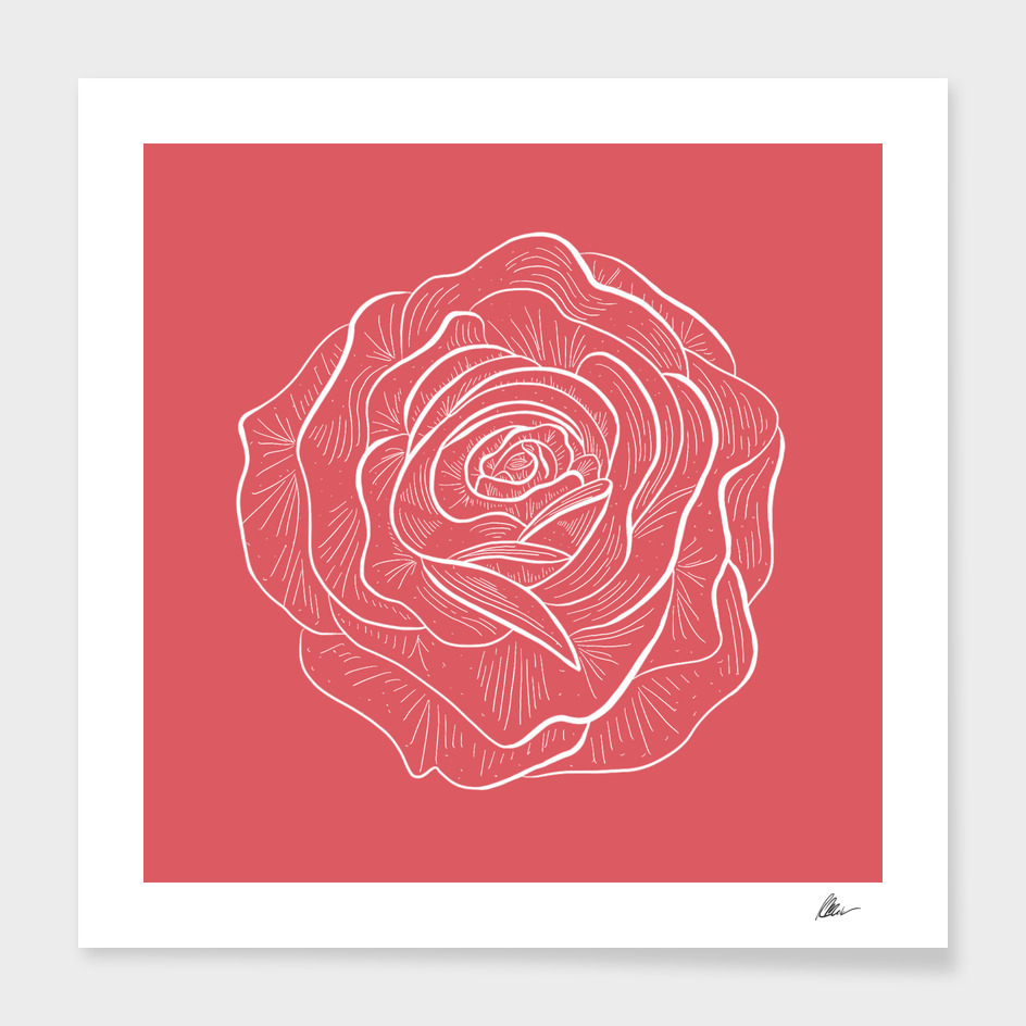Rose main illustration