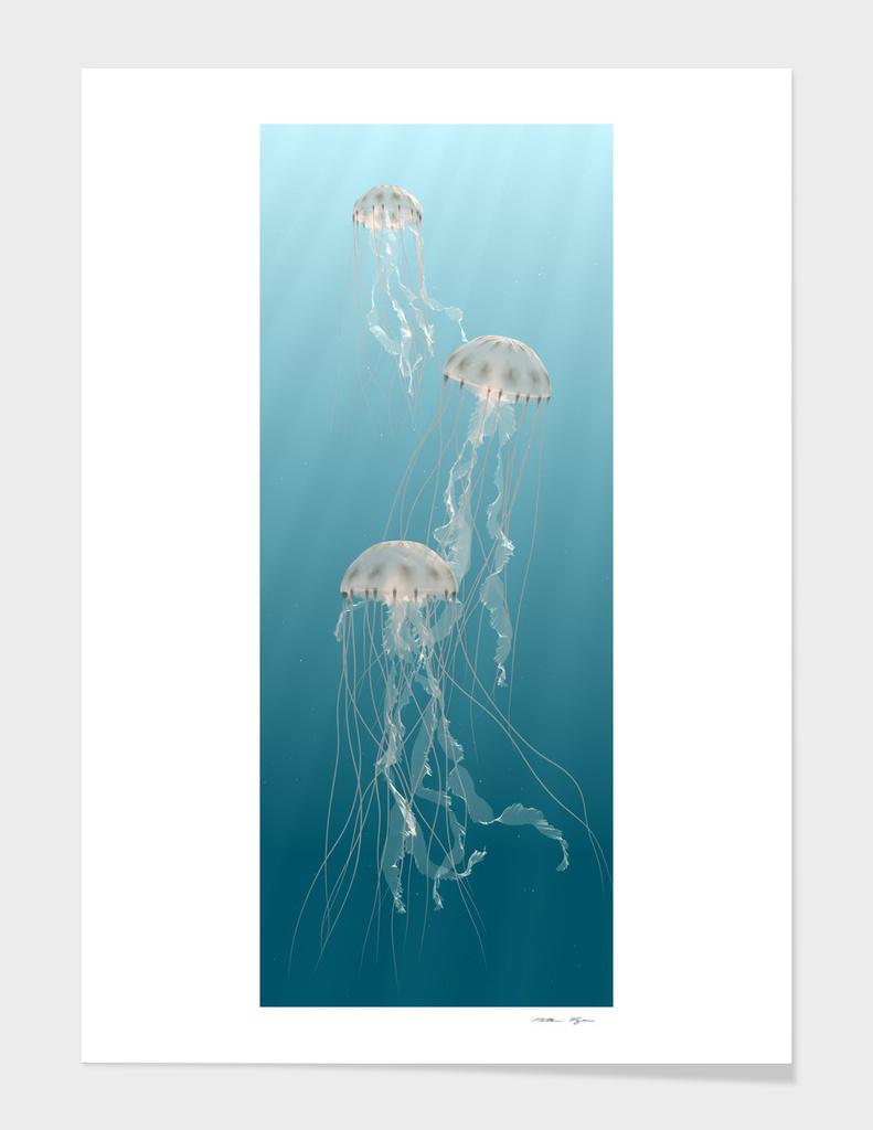 Jellyfish main illustration