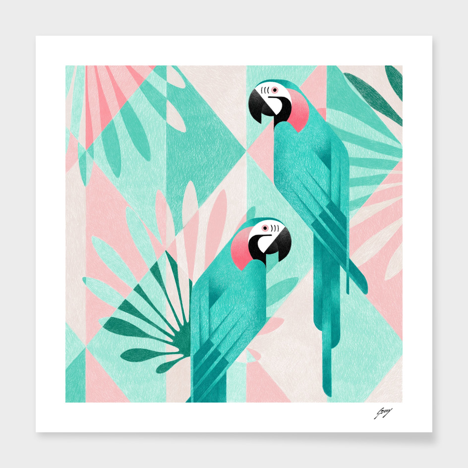 Macaw_HD main illustration