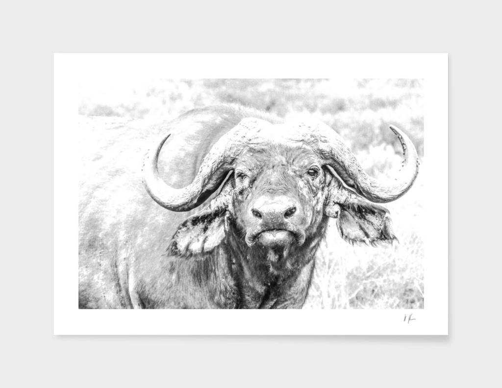 Old Buffalo main illustration