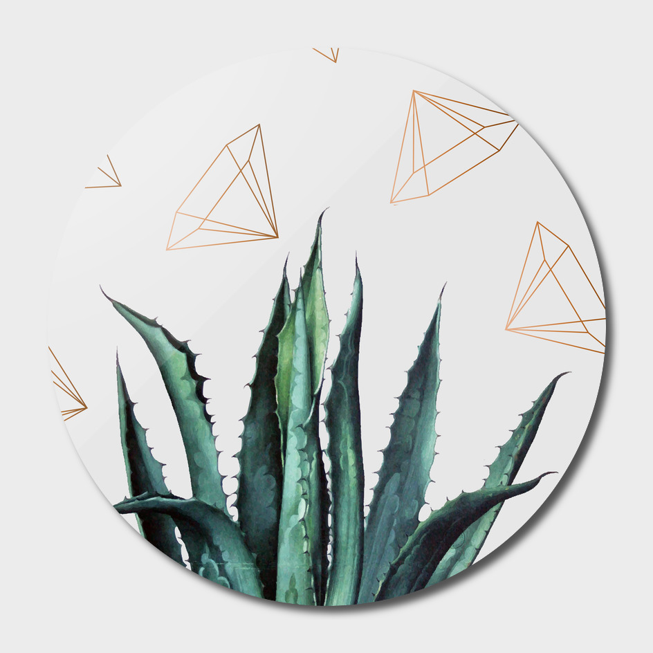 Agave Geometry main illustration