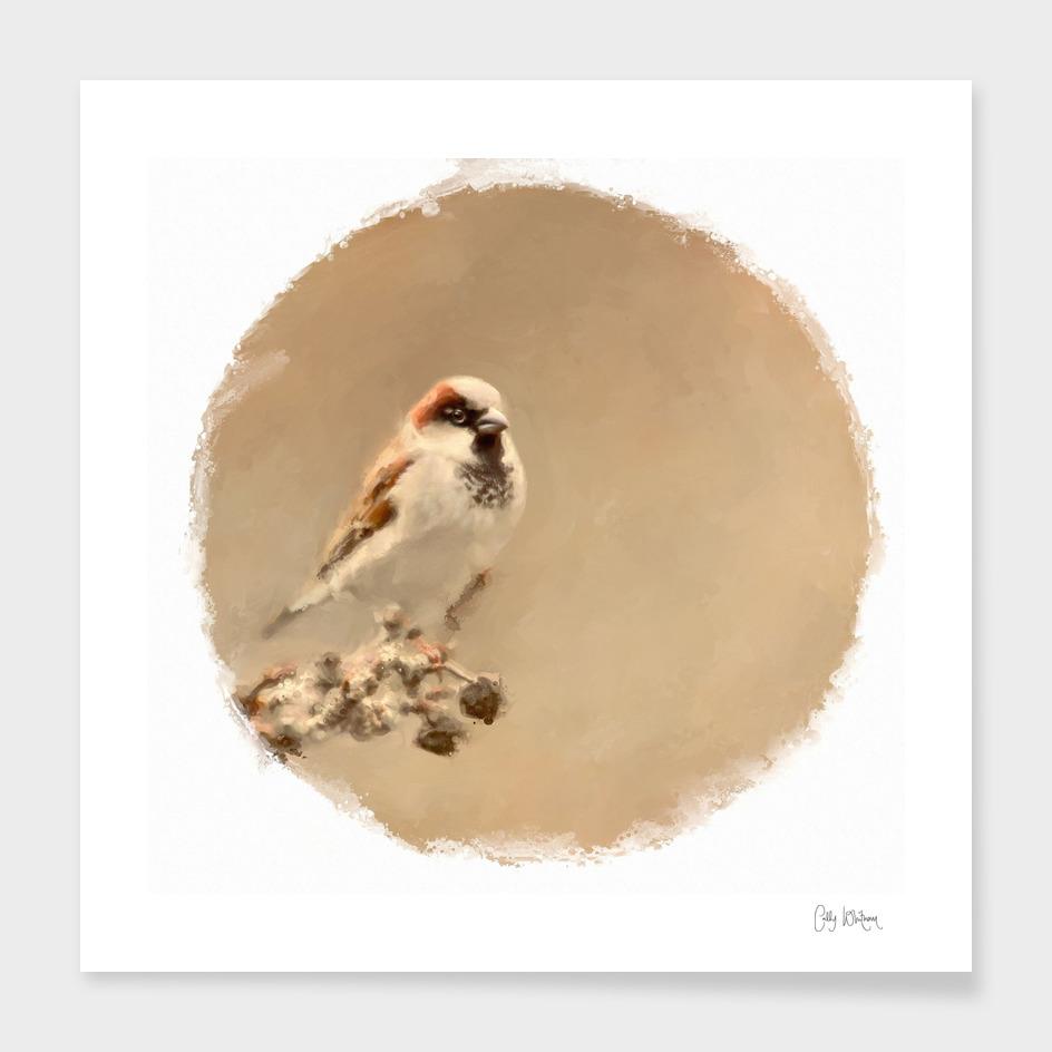 sparrow 21 main illustration
