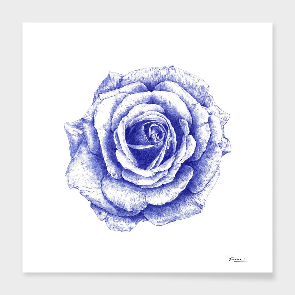Ballpoint Blue Rose main illustration