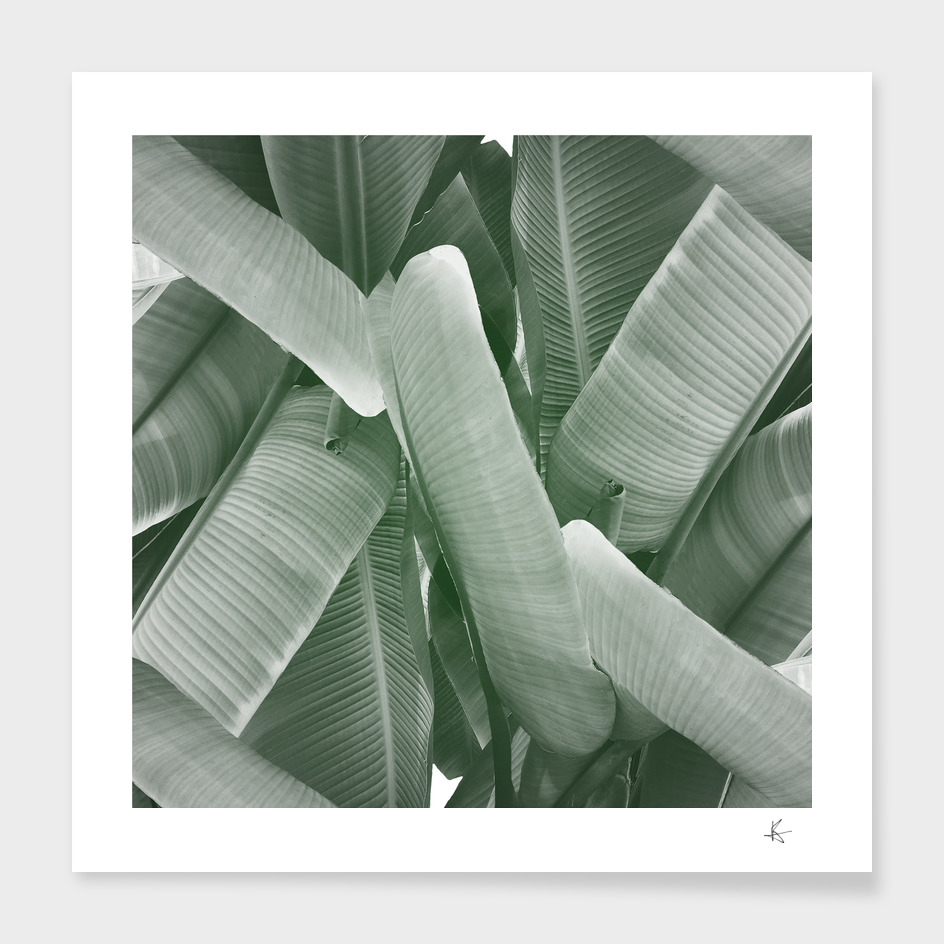 Botanical main illustration