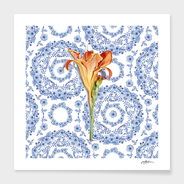 Blue Rhapsody Daylily main illustration