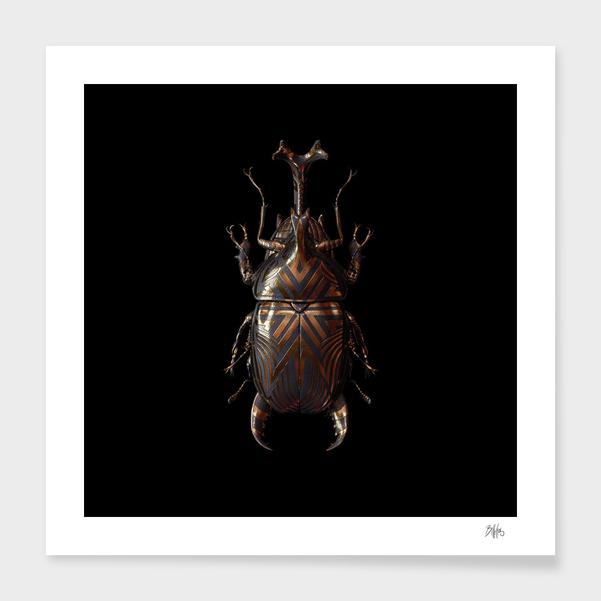 Engraved Entomology A main illustration