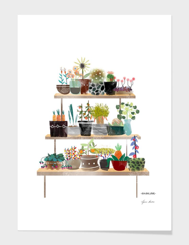 Indoor Botanical Plants main illustration