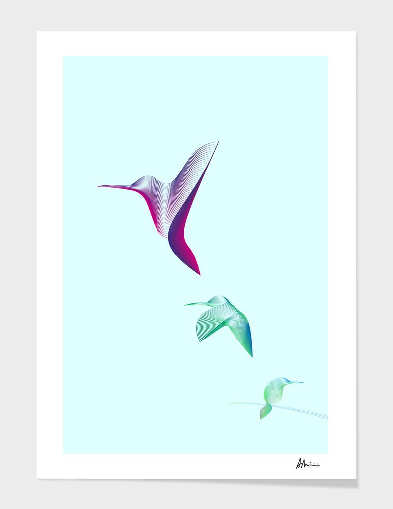 Hummingbirds main illustration