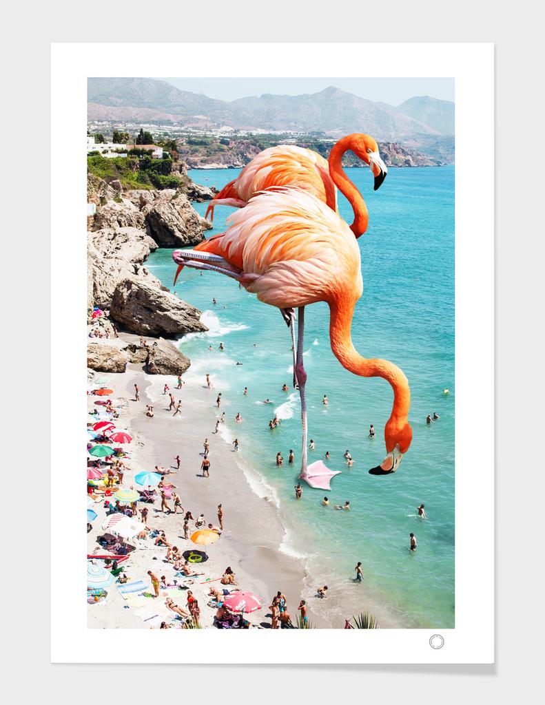 Flamingos on the Beach main illustration