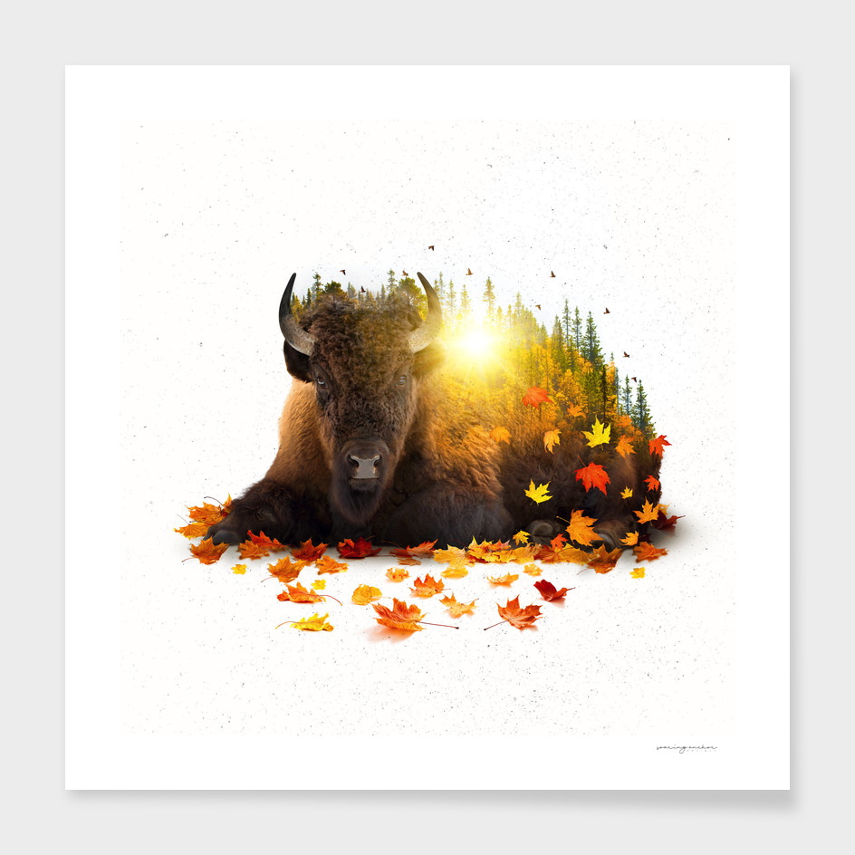 Equinox | Buffalo main illustration