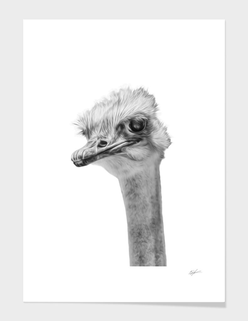 Ostrich - whats up? main illustration