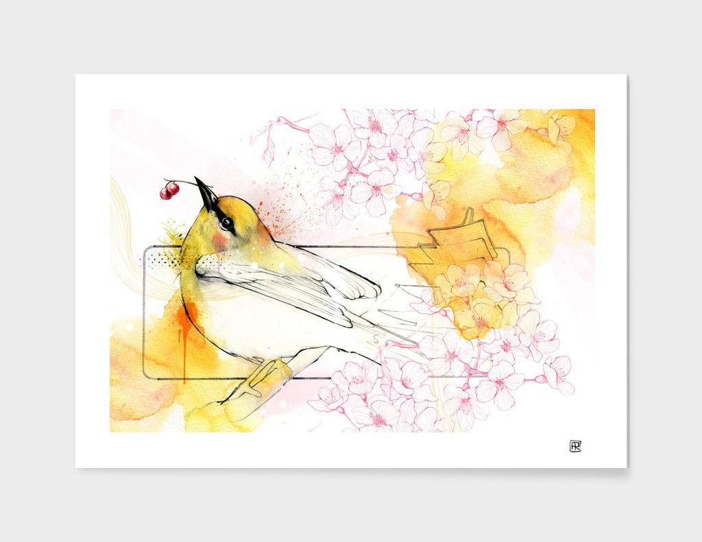 Canary main illustration
