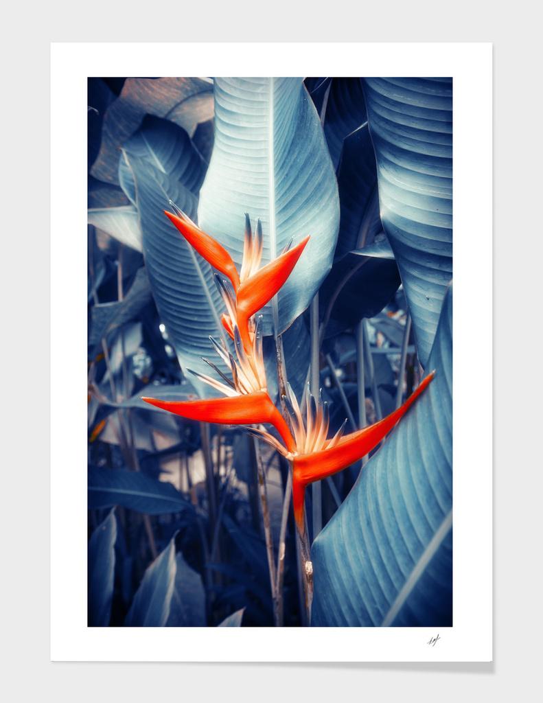 Tropical Parakeet Flower main illustration