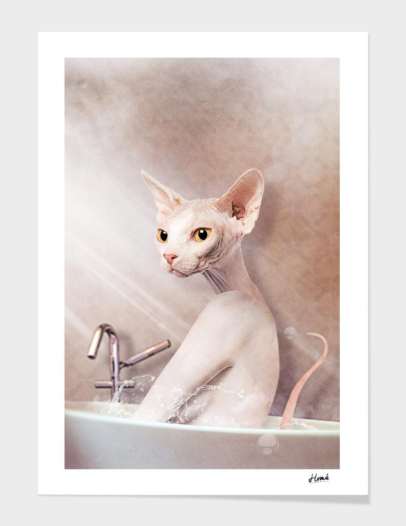Cat main illustration
