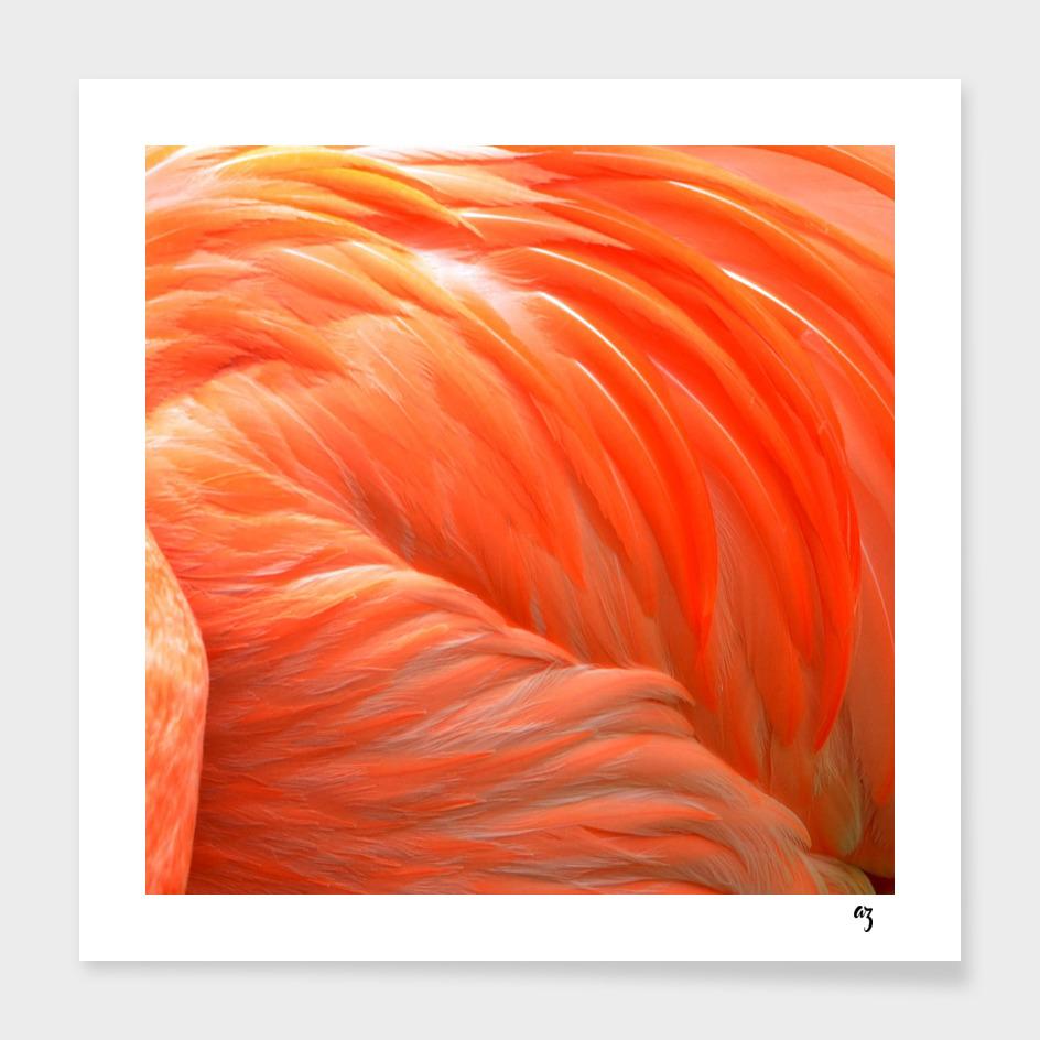 flamingo main illustration