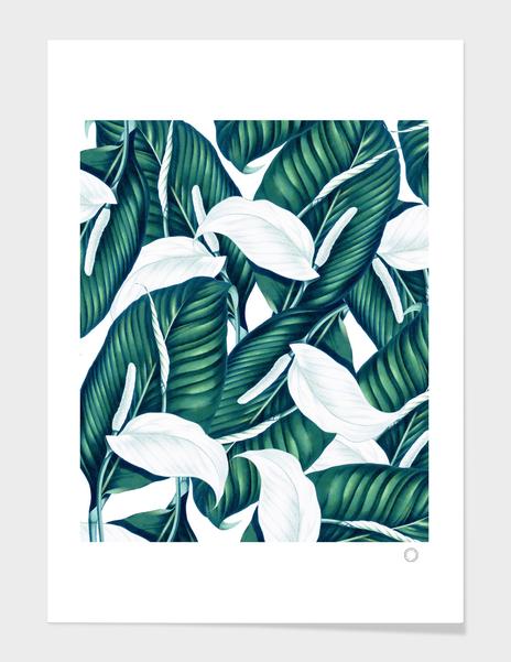 Tropical Winter main illustration
