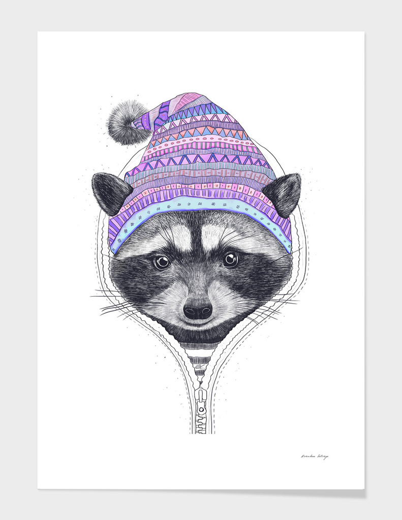 The raccoon in a hood main illustration
