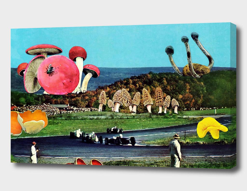 Mushroom Land main illustration