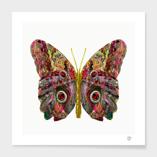 Float Like A Butterfly main illustration