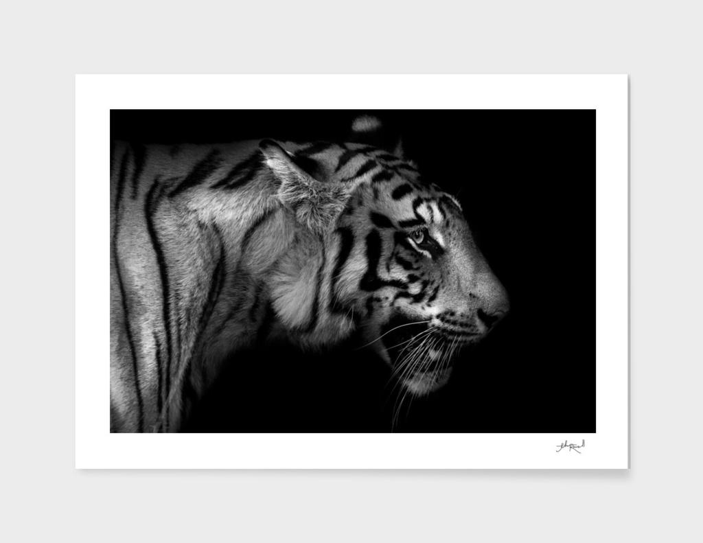 Wild ART - Tiger 1 main illustration