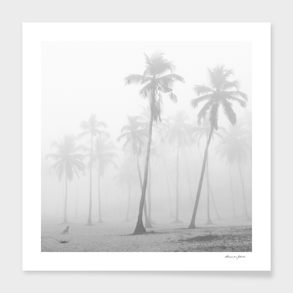 Misty palms main illustration
