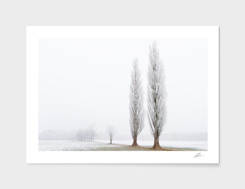 2 in hoar frost