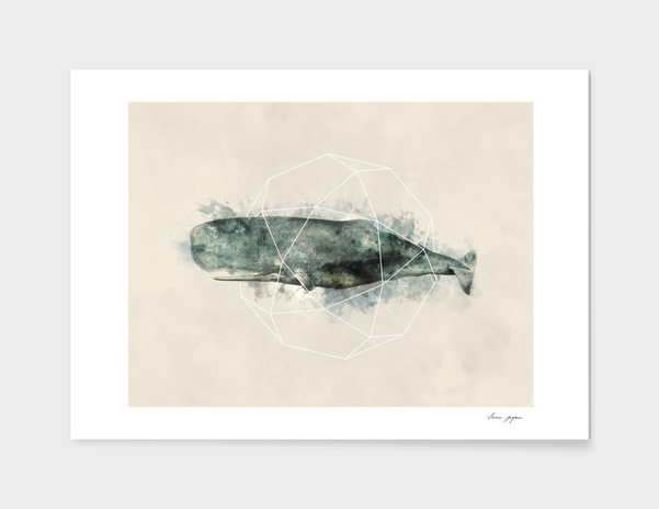 Geo Whale Watercolor main illustration