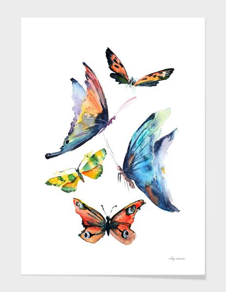 butterfly main illustration