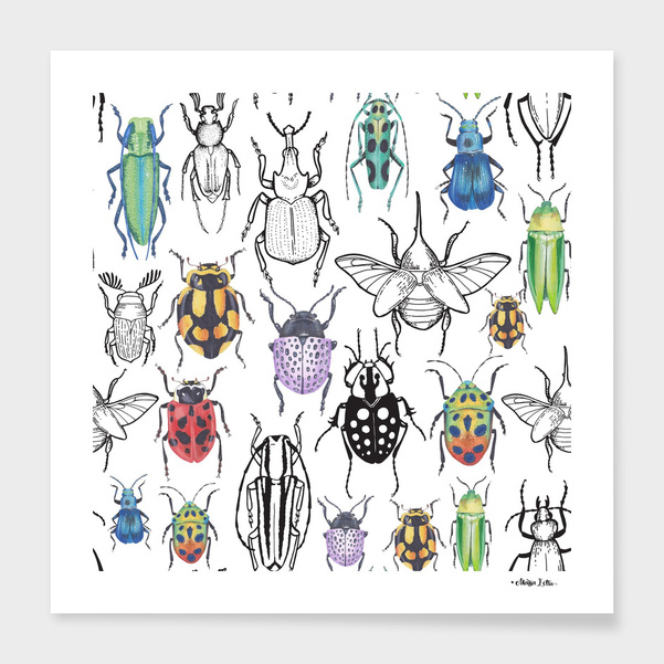 Colorful bugs main illustration