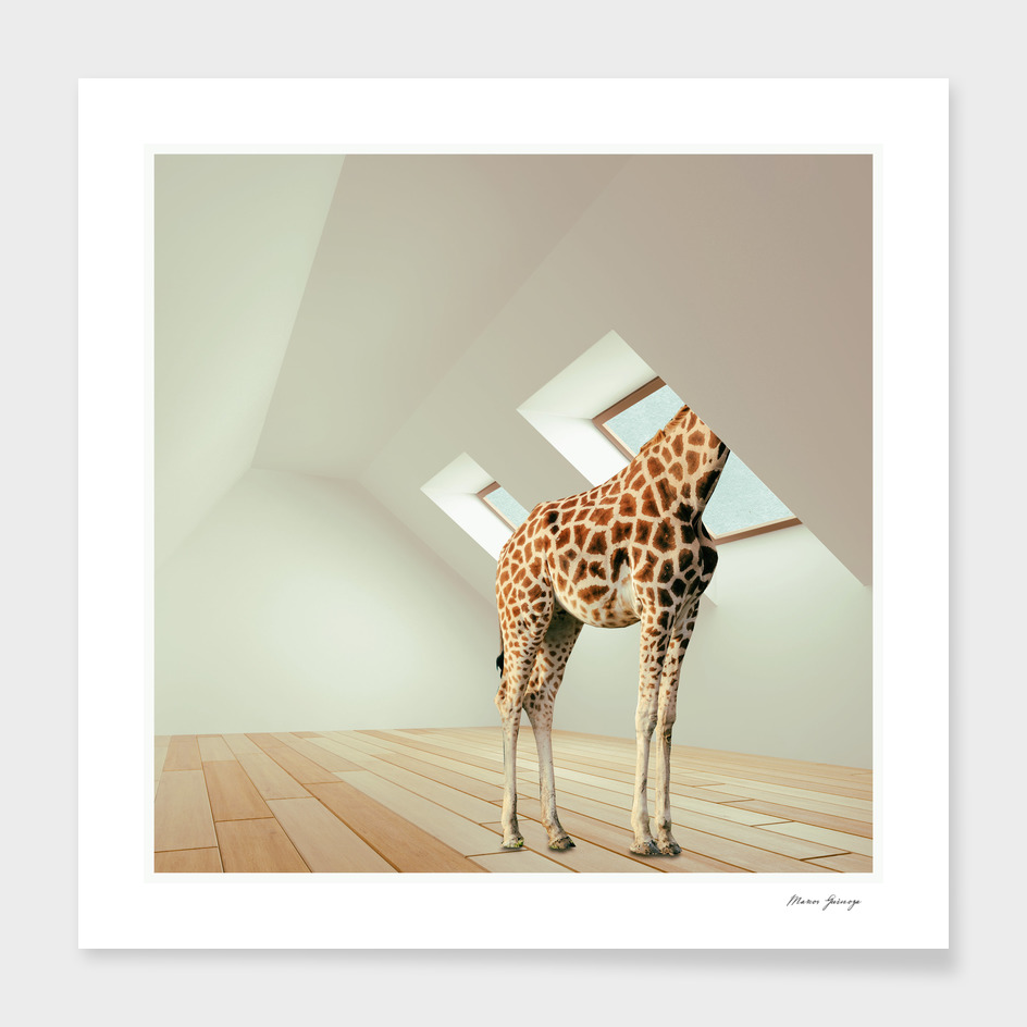 the last giraffe main illustration