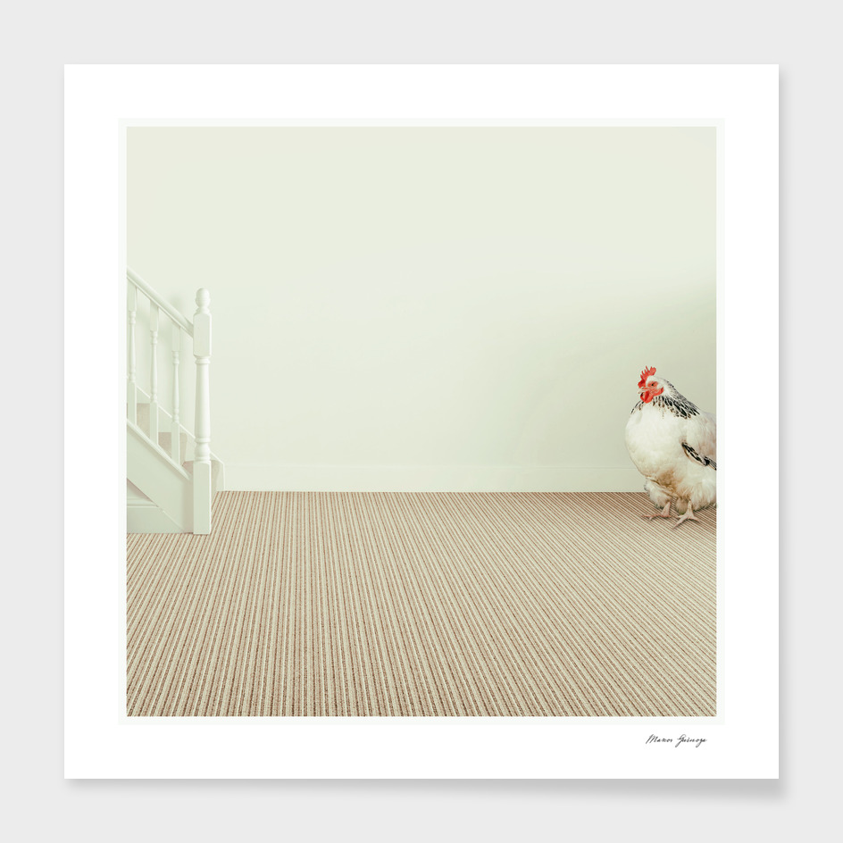 the last rooster