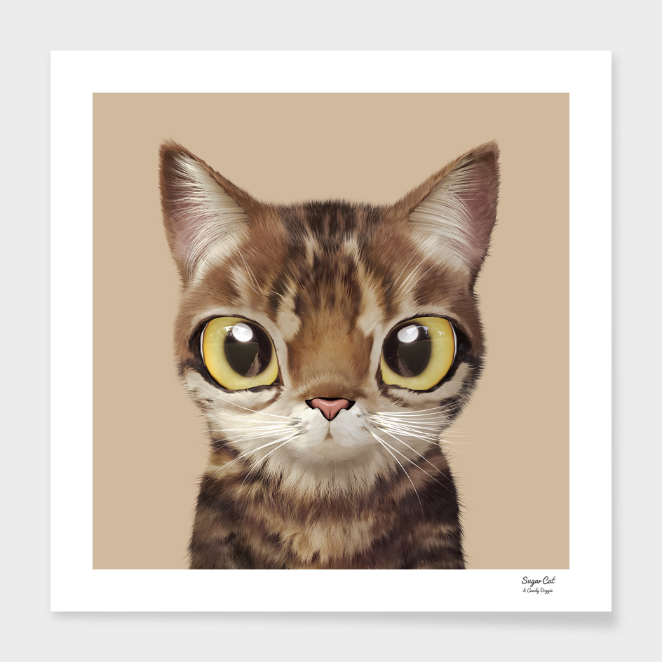 Nut the cat main illustration