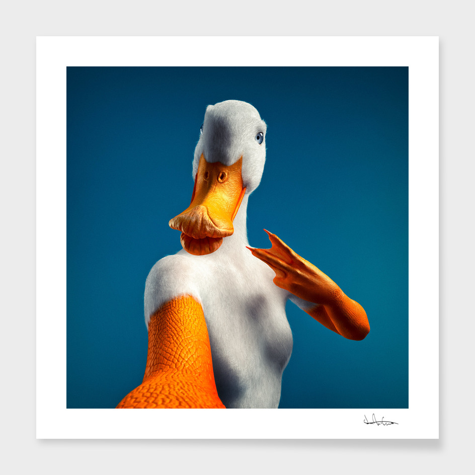 Duck main illustration