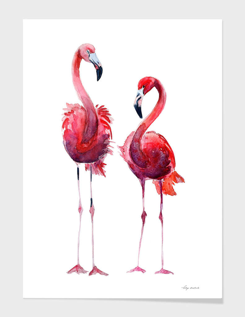 Pink flamingos main illustration