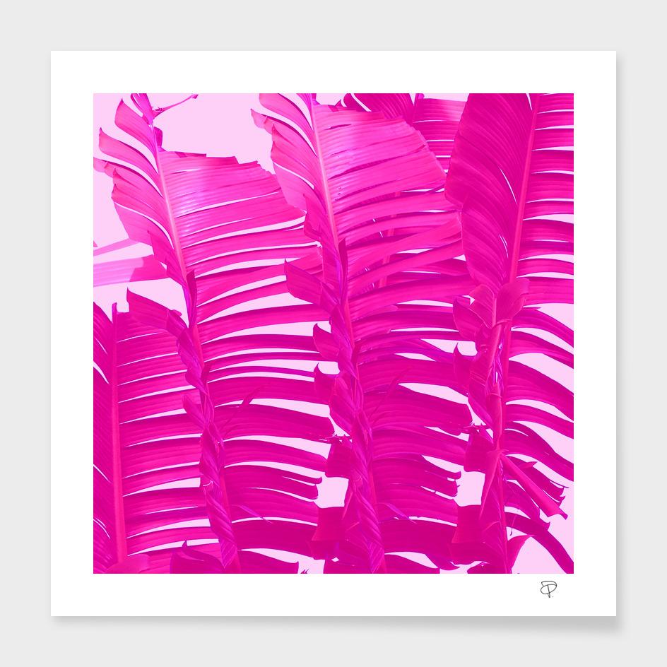 Pink Crush main illustration