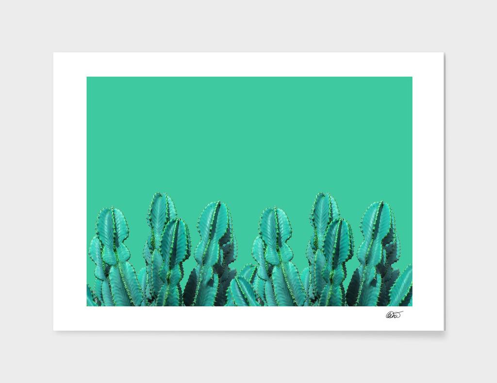 Turquoise Cactus main illustration