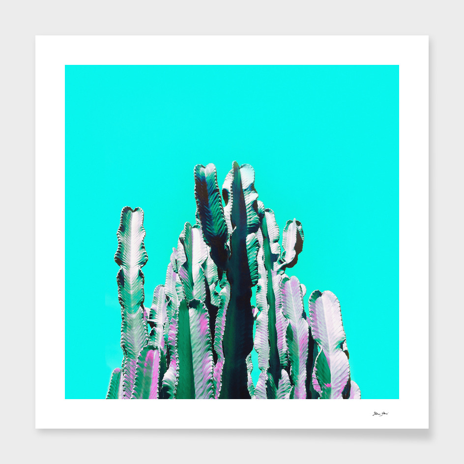 Majestic Cactus main illustration