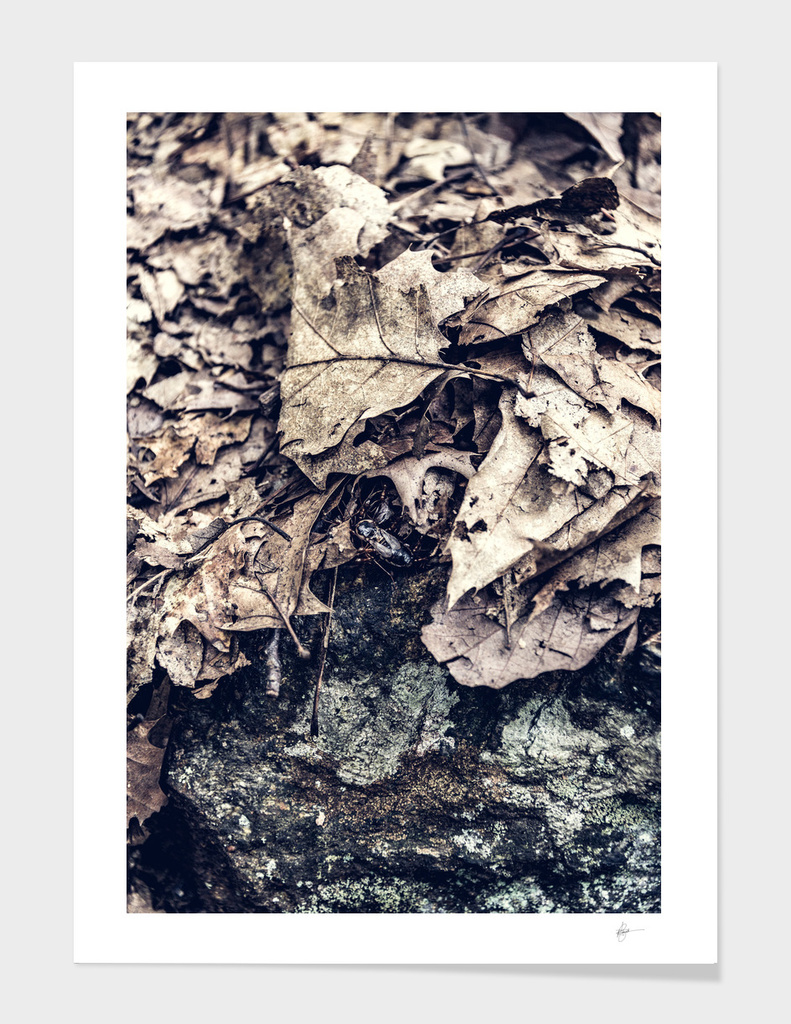 In the thick-From the Nature As Abstract Series