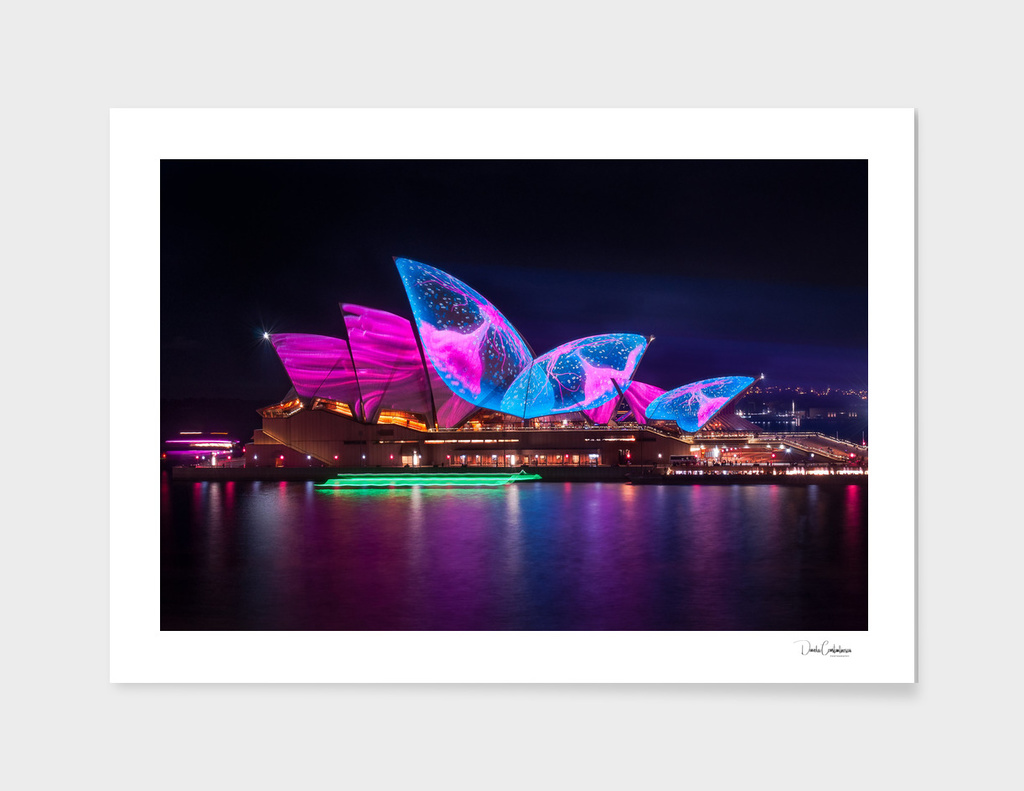 A Sea Creature finds home on the Opera House  shell roofs main illustration