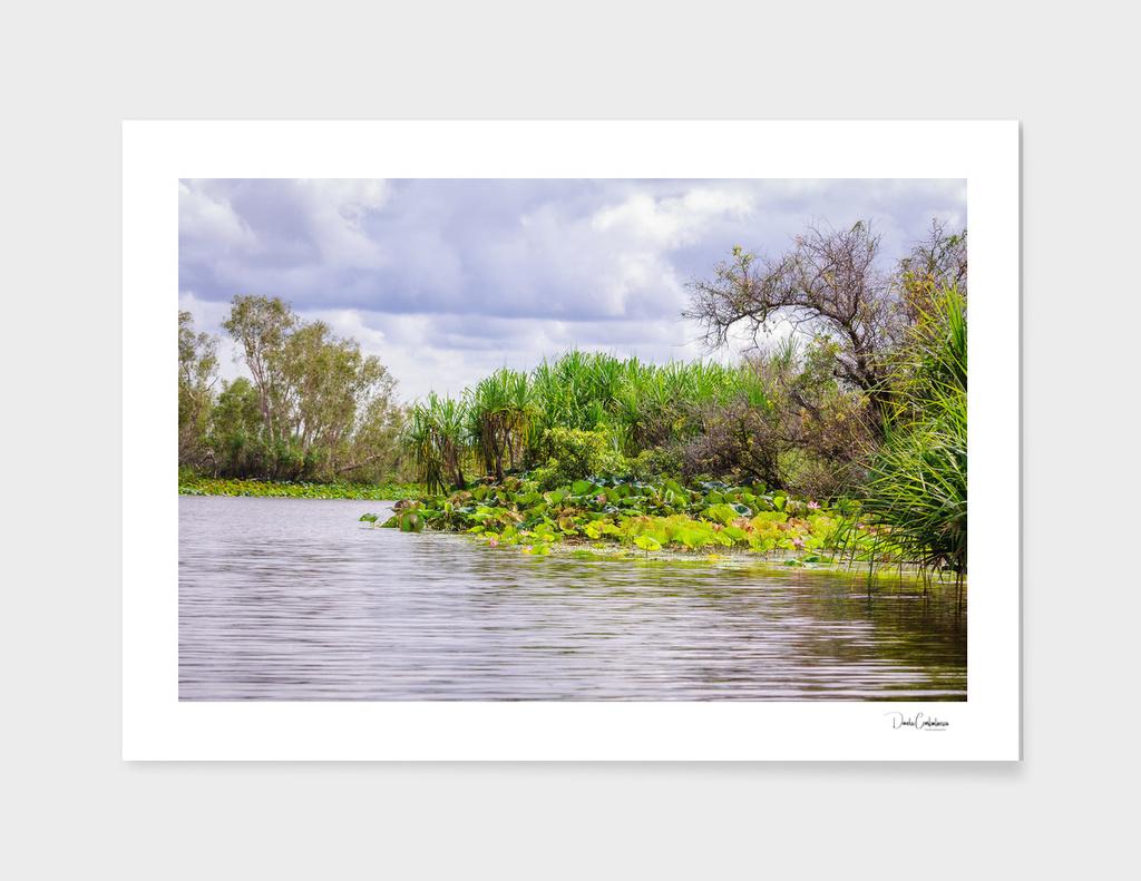 Corroboree Billabong in Northern Territory, Australia
