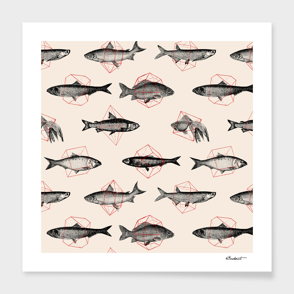 Fish in Geometrics main illustration