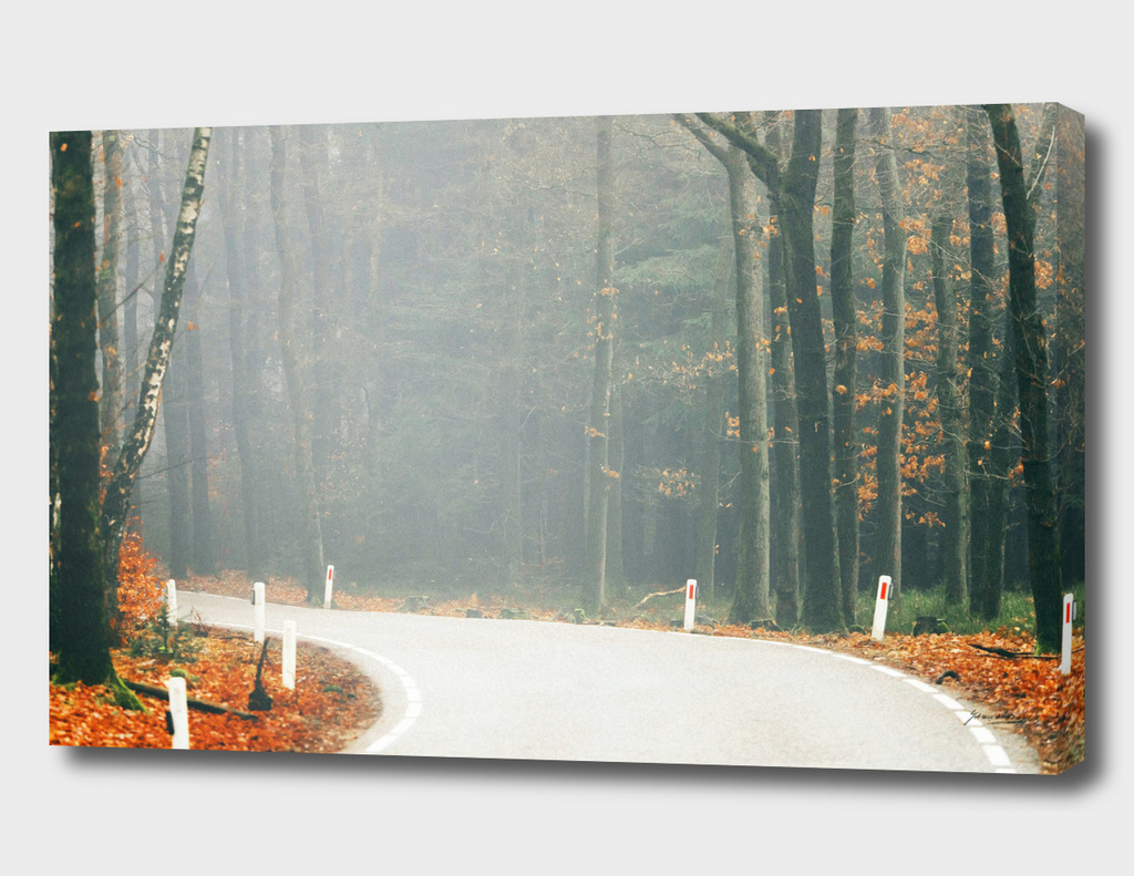Curvy road in misty fall forest