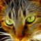 Tony Meaney's avatar